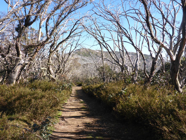 Howqua track to Mt Stirling