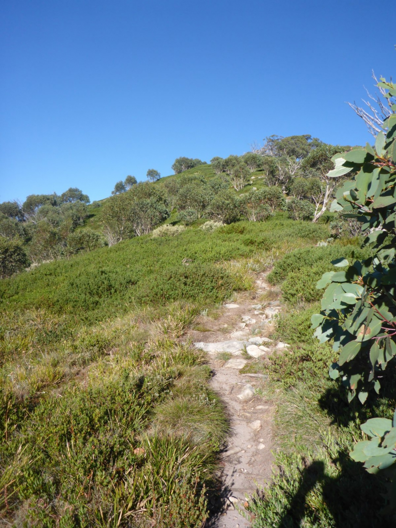 The track up Mt Speculation